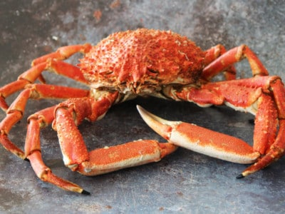 Whole Male Spider Crab | Order Online | Next Day Delivery
