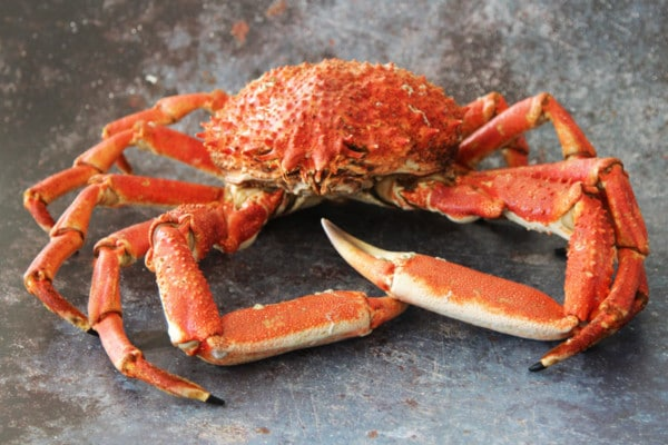 Whole Male Spider Crab   Order Online   Next Day Delivery
