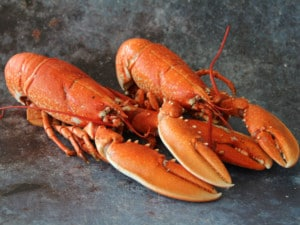 Whole Cornish Lobster | Order Online | Next Day Delivery