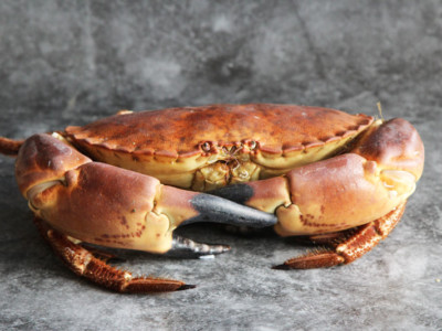 Whole Cornish Male Crabs | Order Online | Next Day Delivery