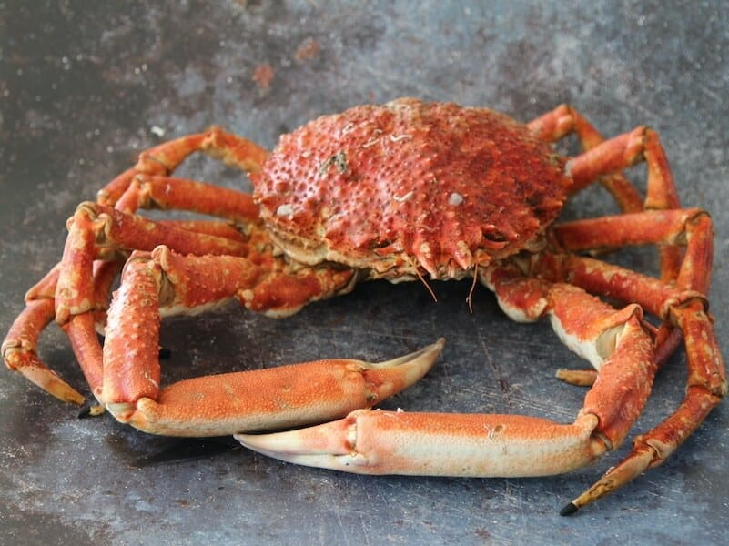 Cornish King Crab from W. Harvey and Sons